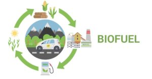 biofuel cycle